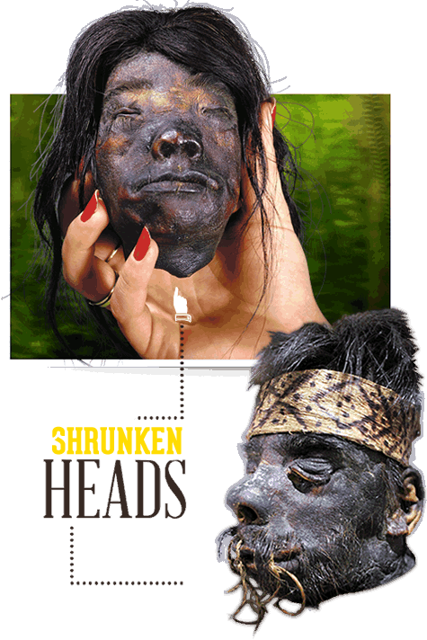 shrunkenheads-slider-home11