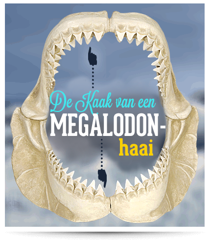 Amsterdam Ripley's Believe It or Not Megalodon Shark jaw