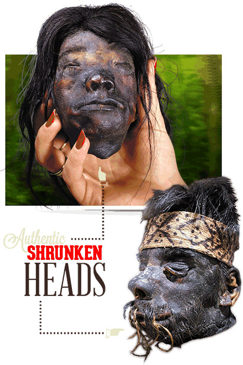 Gatlinburg Ripley's Believe It or Not Shrunken Heads