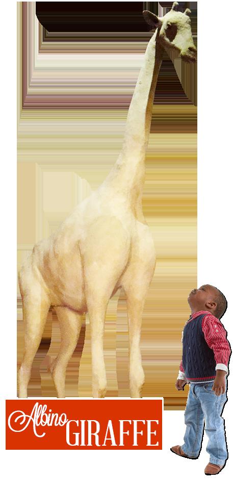 Gatlinburg Ripley's Believe It or Not albino giraffe