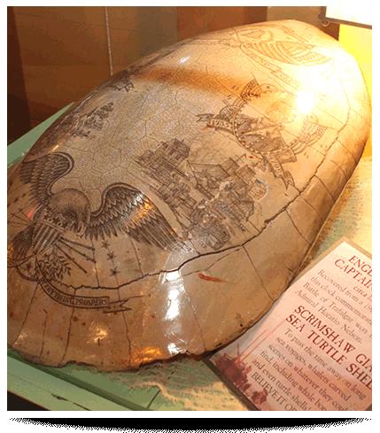 Grand Prairie Ripley's Believe It or Not Scrimshaw Giant Sea Turtle Shell