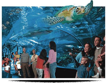 Myrtle Beach Aquarium Prices