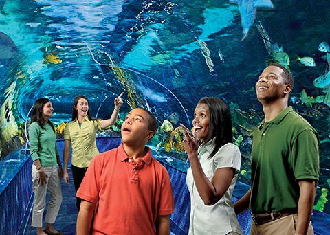 Aquarium Of Myrtle Beach Ripley S