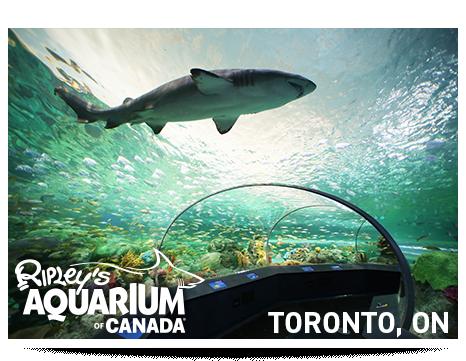 [Image: rac-aquarium-1.png]