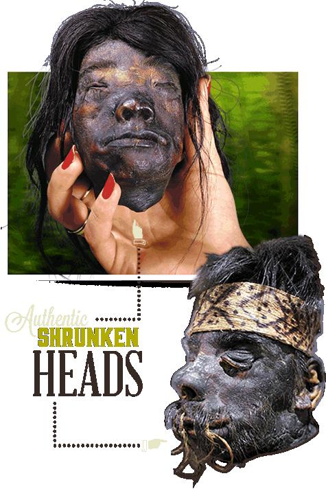Orlando Ripley's Shrunken Heads
