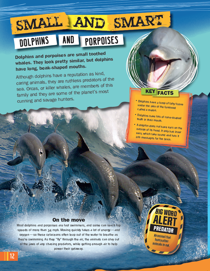 Whales And Dolphins Ripley Publishing