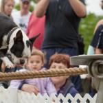 Tightrope-Walking Dog