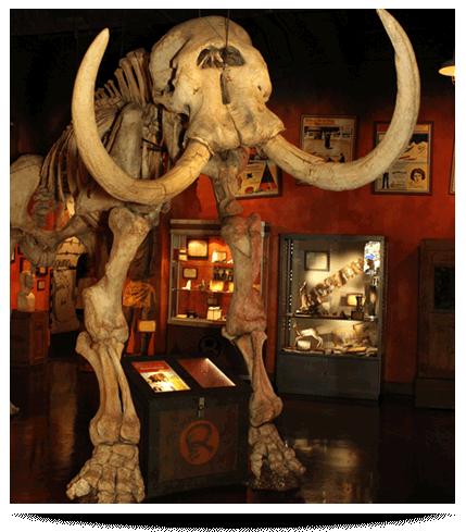 San Antonio Ripley's Believe It or Not Mammoth Skeleton