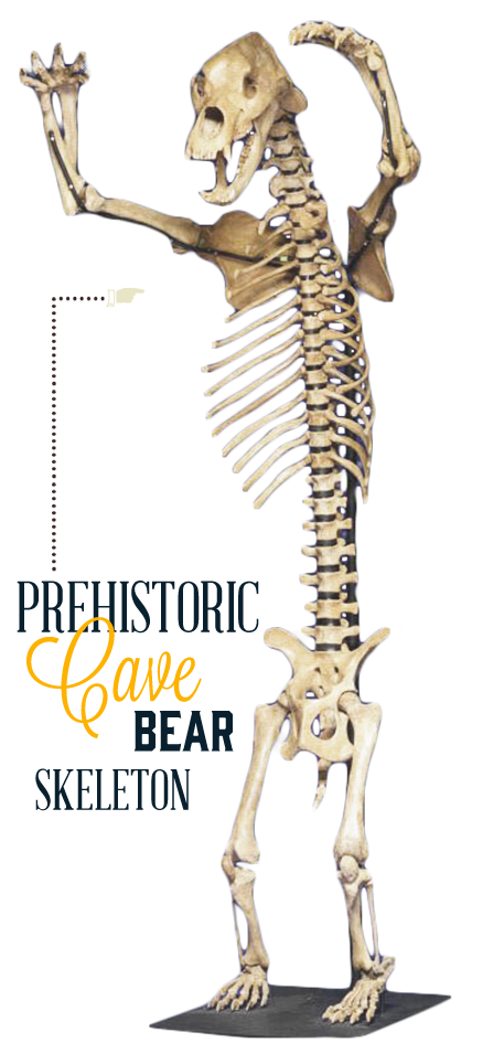 San Francisco Ripley's Believe It or Not Cave Bear Skeleton