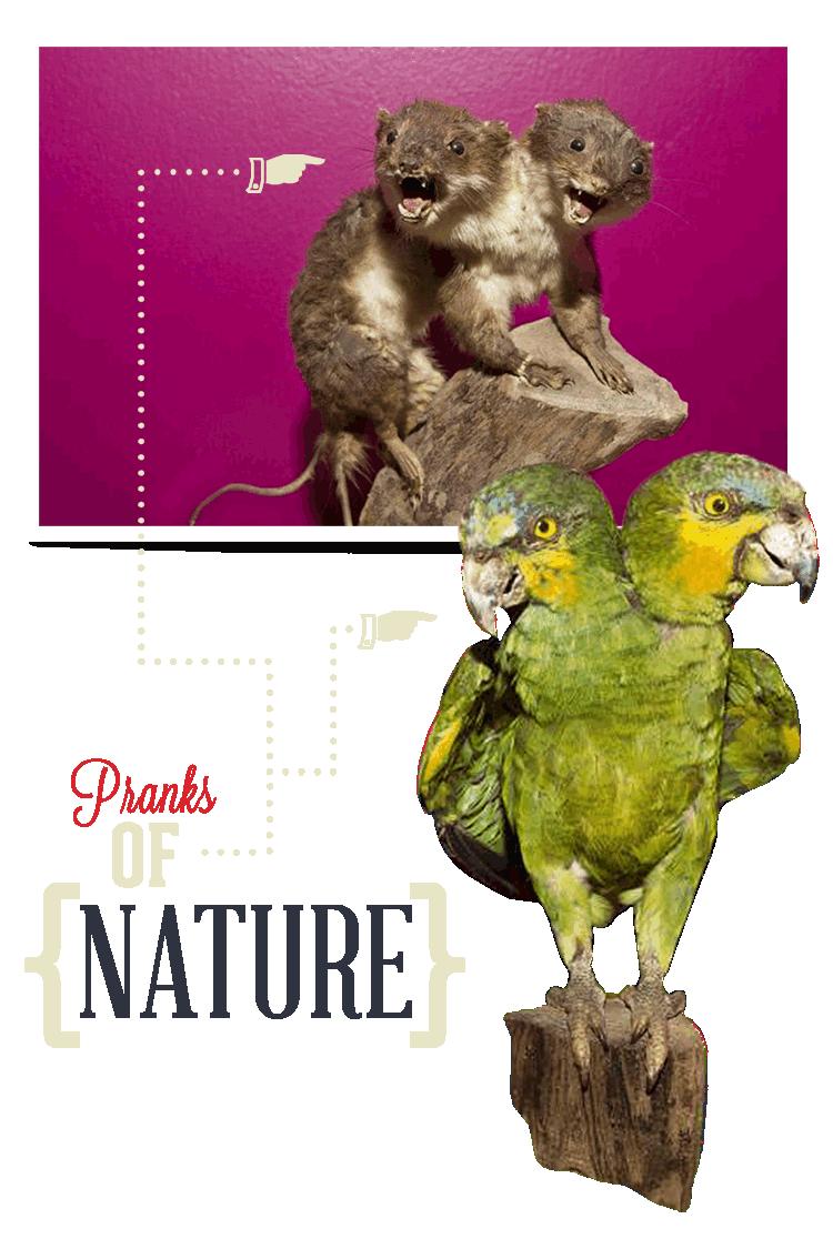 Williamsburg Ripley's Scrap Pranks of Nature