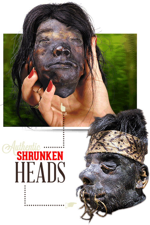 Williamsburg Ripley's Shrunken Heads