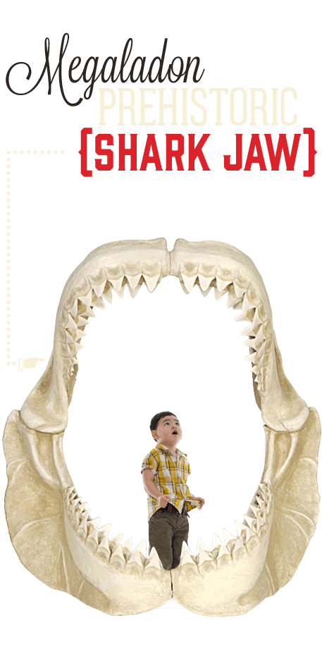 Williamsburg Ripley's Believe It or Not Prehistoric Shark Jaw