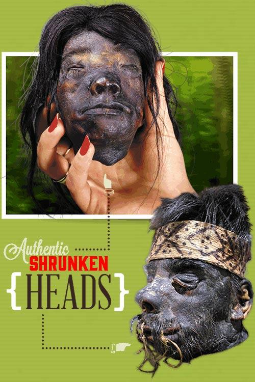 bion-slider_heads