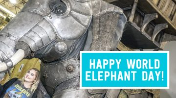 Unboxing World Elephant Day
