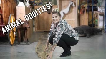 AnimalOddities-Thumbnail