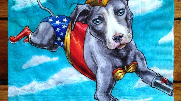 Wonder Woman Pitbull