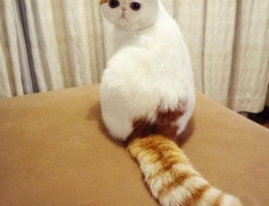 Cat looking back