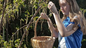 Spaghetti Trees of Switzerland