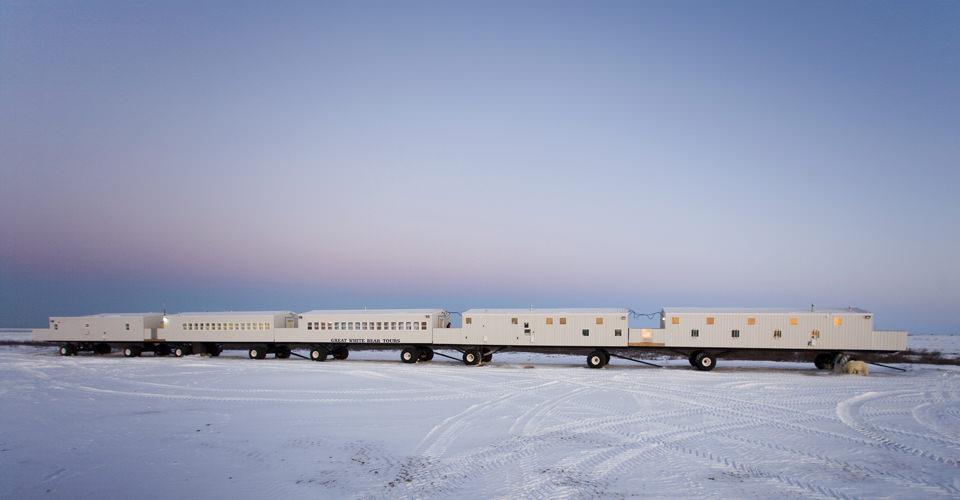 Polar Bears Tundra Lodge