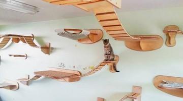 crazy cat heaven