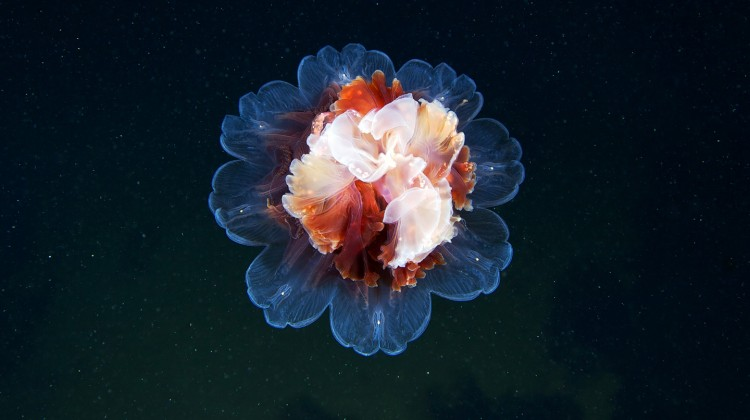 Jellyfish in Space