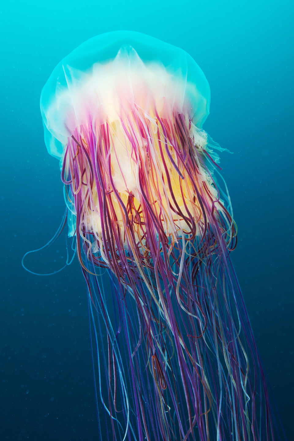 Jellyfish in Space! - Ripley's BION Blog