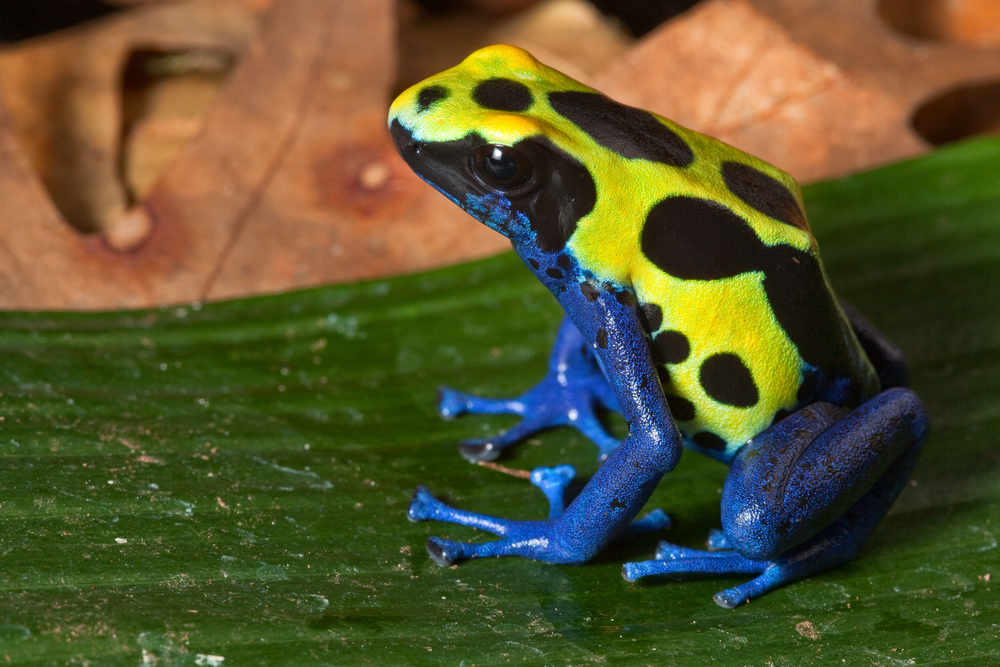 29 Of The Most Spectacular Frogs You Have Ever Seen