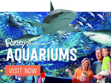Ripleys Aquariums