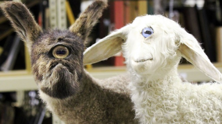 Cyclops goat and sheep