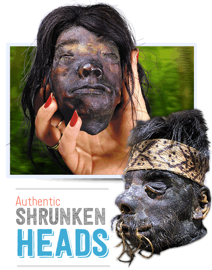authentic shrunken heads
