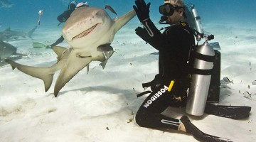 Petting a Tiger Shark