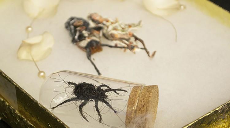 Christian Baloga's human hair black widow spider