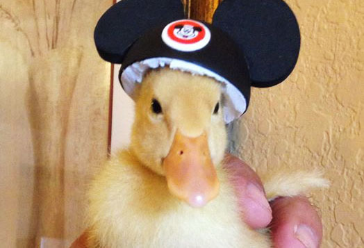 Donald Visited Orlando, FL