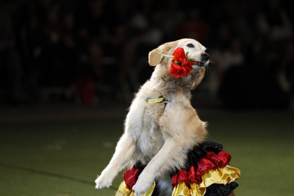 dog dancing with flower in mouth