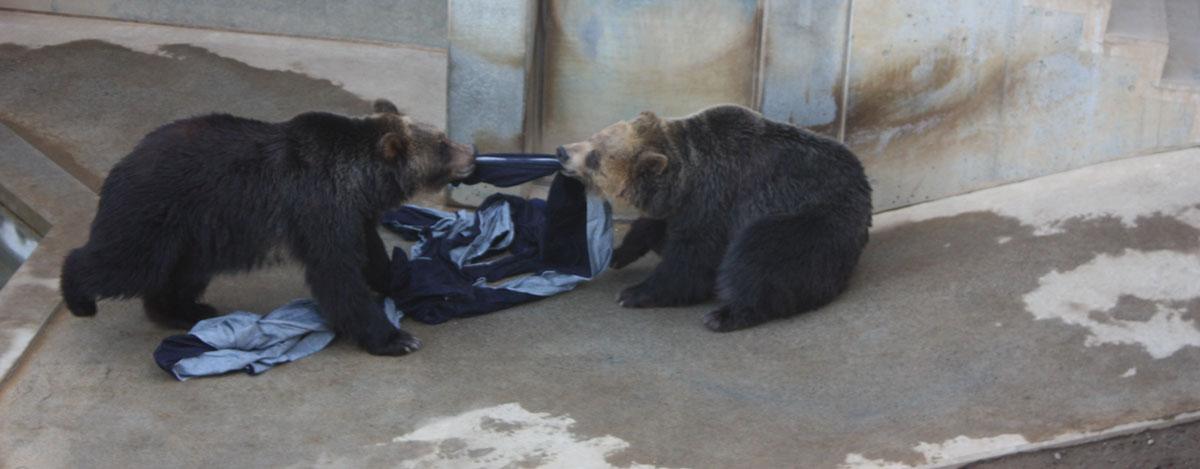 Bears Hard at Work