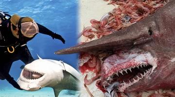 Decomposing shark
