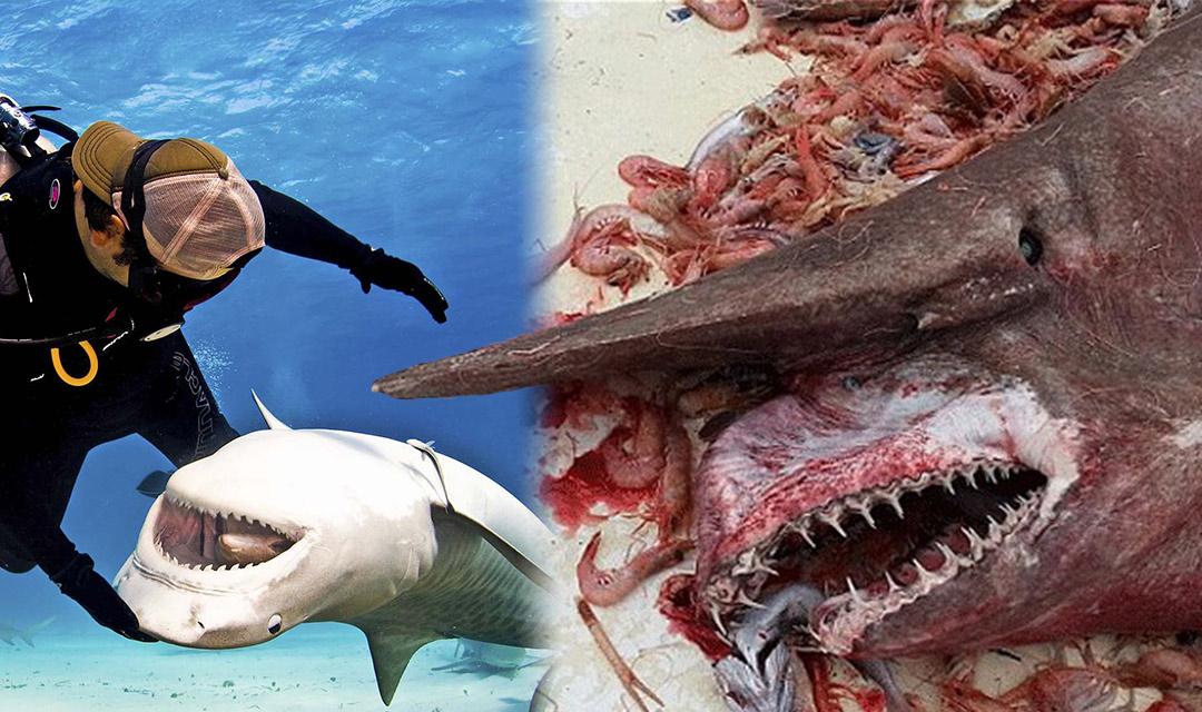 15 Odd Stories In Honor Of Shark Week