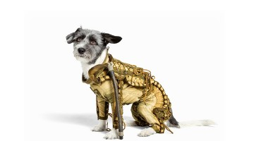 Authentic Dog Space Suit