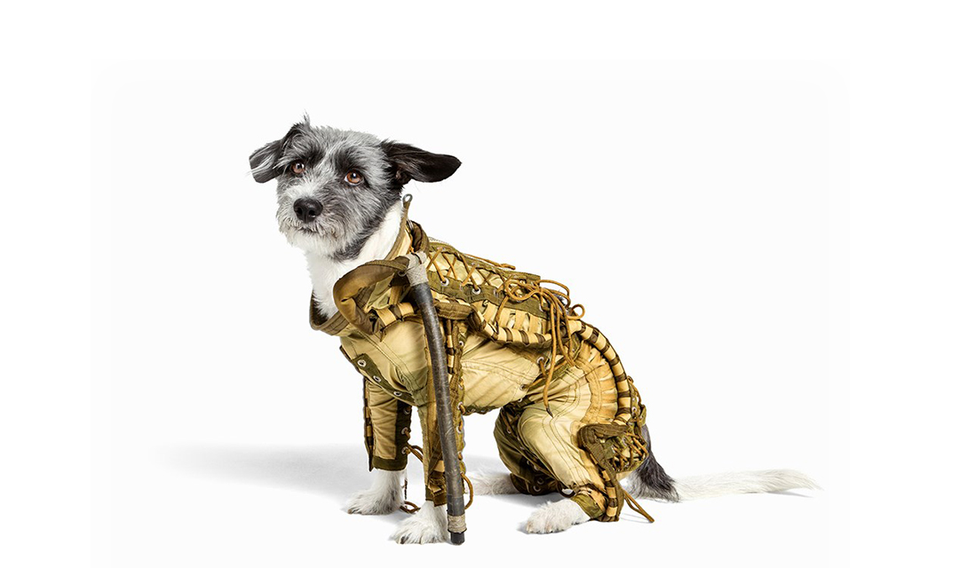 dog in space suit - photo #20