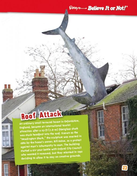 Unbelievably Zany! shark on roof