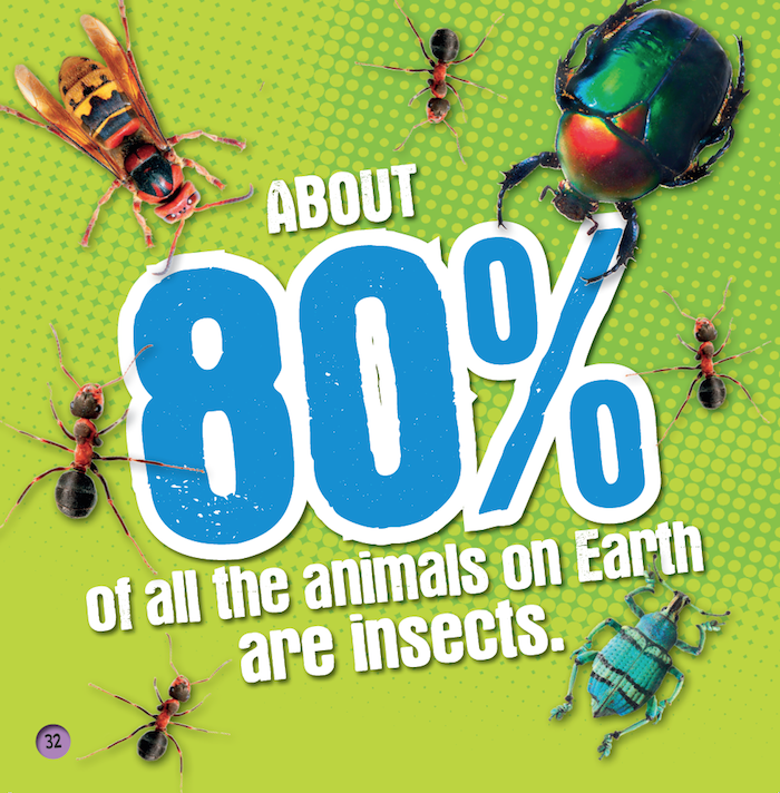 80% of animals on earth are insects