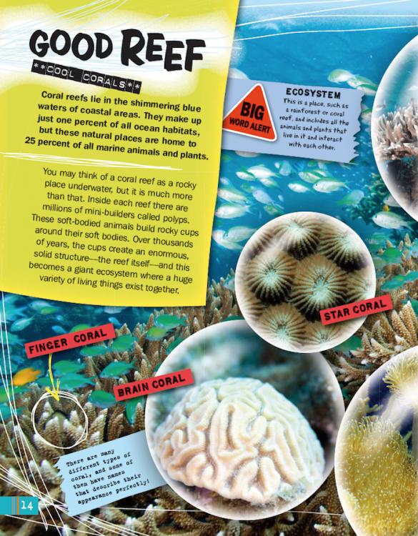 Oceans reefs