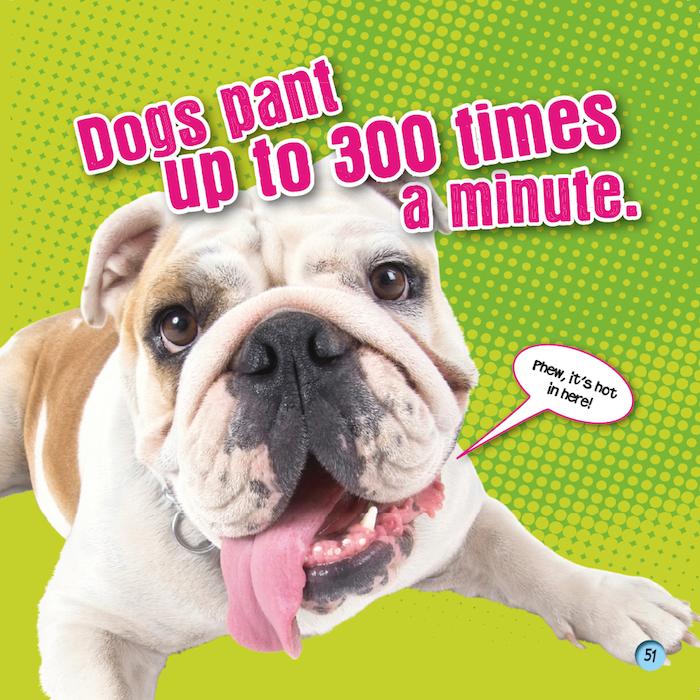 bulldog fun fact