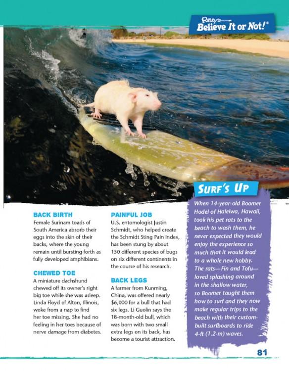 Simply Shocking! surfing rat