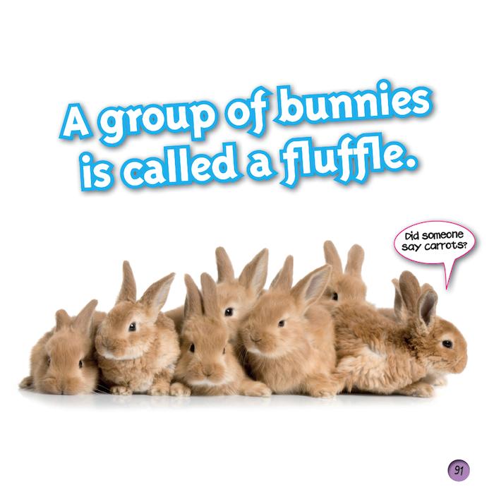bunnies fluffle