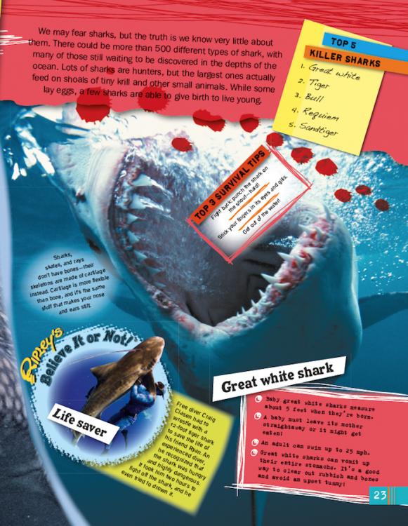 Oceans sharks