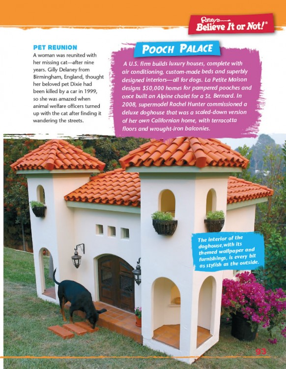 Simply Shocking! pooch palace