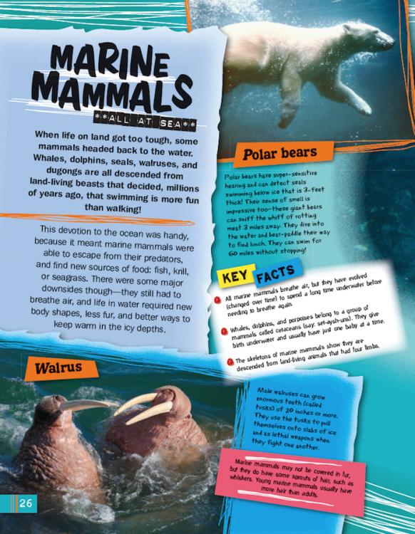 Oceans marine mammals