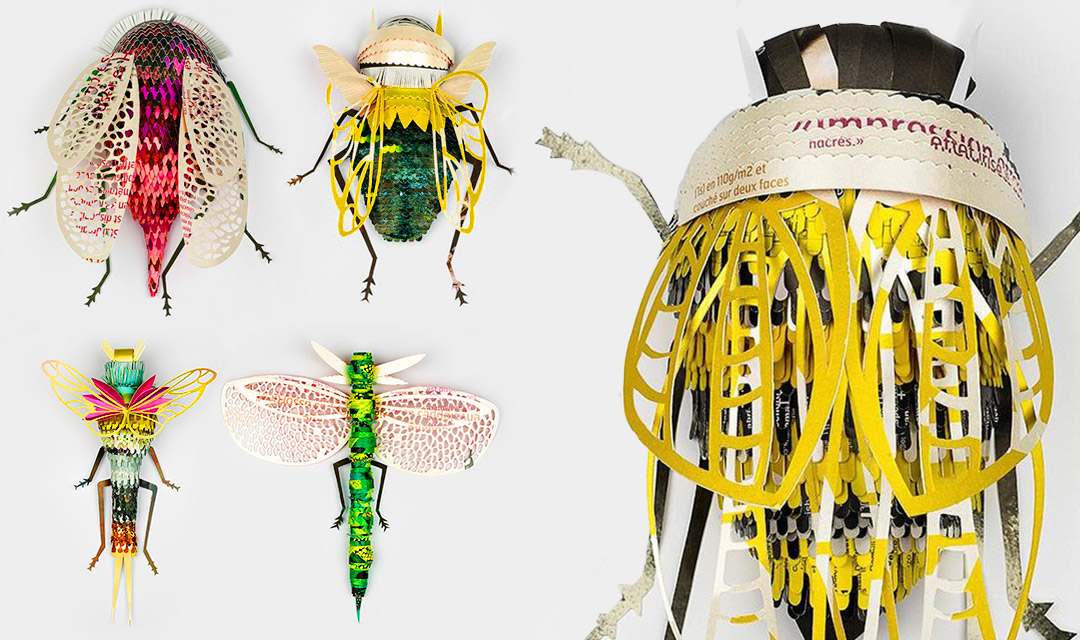 Bug-Collection-plus-closeup-Header
