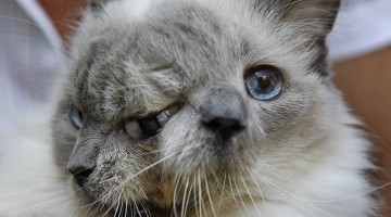 2 faced cat